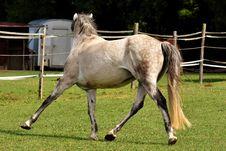 Free Horse, Mane, Mare, Pasture Royalty Free Stock Image - 102569586