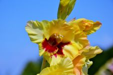 Free Flower, Flowering Plant, Yellow, Plant Royalty Free Stock Photo - 102569685