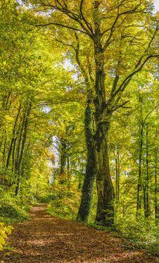 Free Woodland, Nature, Ecosystem, Tree Stock Photography - 102569882
