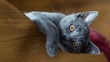 Free Cat, Small To Medium Sized Cats, Mammal, Cat Like Mammal Royalty Free Stock Photography - 102569927