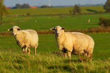 Free Grassland, Pasture, Sheep, Grazing Royalty Free Stock Photo - 102570295