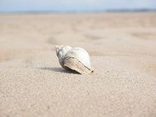 Free Seashell, Sand, Ecoregion, Body Jewelry Stock Photography - 102570442