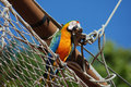 Free Macaw Stock Photography - 10261022