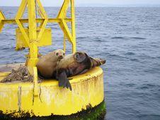 California Seal Royalty Free Stock Image