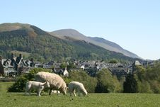 Free Sheep And Hills Stock Photography - 10260862