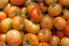 Free Tomatoes Stock Photography - 10263152