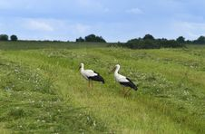 Free Landscape Whith Two Storks Stock Images - 10263774