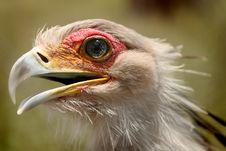 Free Bird Portrait Stock Image - 10264011