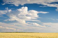 Free Wheat Field Stock Photography - 10264332