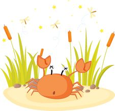 Free Crab Royalty Free Stock Photos - 10266558