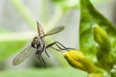 Free Dragonfly Jump Stock Photos - 10268043