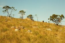 Trees On A Slope Royalty Free Stock Photo
