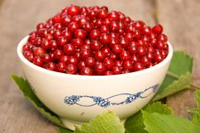 Free Red Currant Royalty Free Stock Photography - 10269837