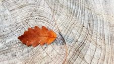 Free Leaf, Plant, Wood, Tree Royalty Free Stock Photos - 102634148