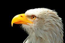 Free Beak, Bird, Bird Of Prey, Eagle Royalty Free Stock Photography - 102634167