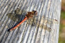 Free Insect, Dragonfly, Invertebrate, Dragonflies And Damseflies Royalty Free Stock Photo - 102634725