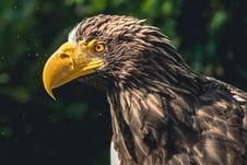 Free Beak, Bird Of Prey, Eagle, Bird Stock Images - 102635014