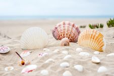 Free Seashell, Conchology, Sand, Cockle Stock Photography - 102642762