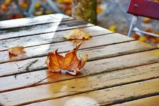 Free Leaf, Wood, Autumn Royalty Free Stock Photo - 102643045