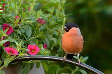 Free Bird, Fauna, Beak, Old World Flycatcher Royalty Free Stock Photos - 102643068