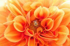 Free Flower, Orange, Yellow, Close Up Royalty Free Stock Photos - 102643548