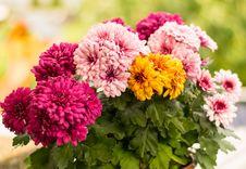 Free Flower, Flowering Plant, Plant, Floristry Stock Photo - 102643630