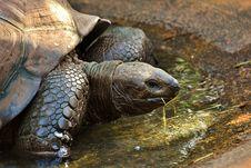 Free Tortoise, Turtle, Terrestrial Animal, Emydidae Stock Photography - 102643702