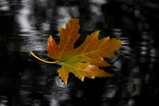 Free Leaf, Maple Leaf, Autumn, Tree Stock Photo - 102644460