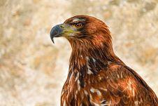 Free Beak, Bird, Bird Of Prey, Eagle Royalty Free Stock Photo - 102644675
