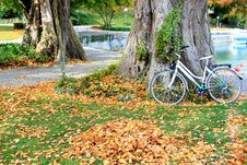 Free Yellow, Tree, Road Bicycle, Leaf Stock Images - 102645534