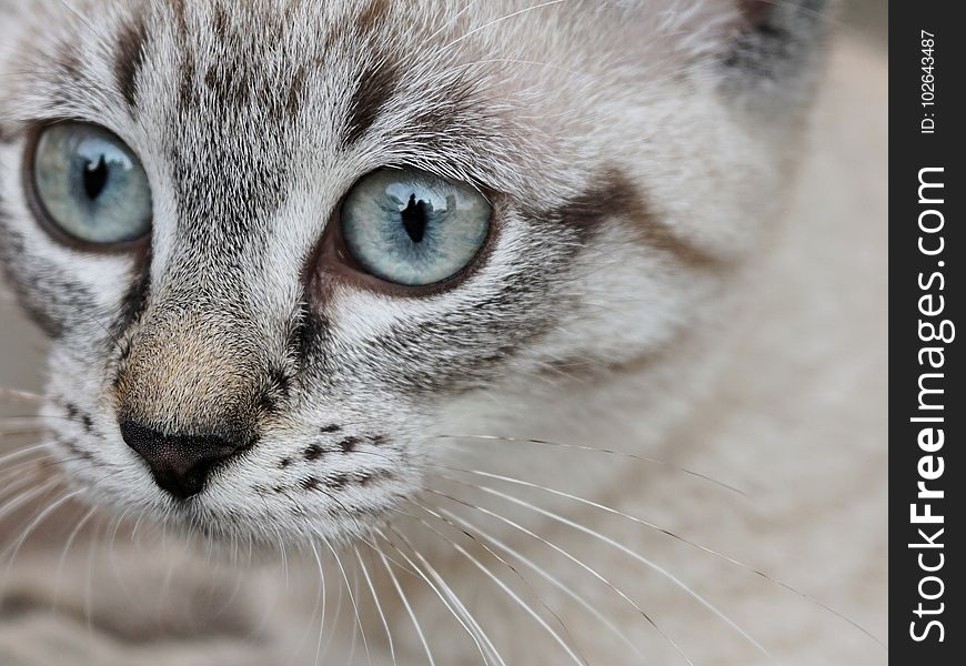 Cat, Whiskers, Eye, Small To Medium Sized Cats