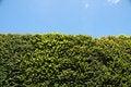 Free Tree Against Blue Sky Royalty Free Stock Photos - 10275308