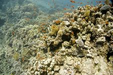 Free Coral And Fish Stock Photos - 10270473