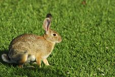 Free Rabbit Stock Photo - 10270680