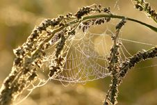 Free Spider Web On A Meadow At Sunrise Stock Photos - 10270953