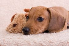 Free Puppy Stock Images - 10271144