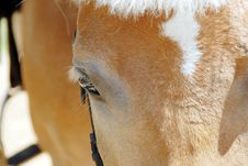 Free Horse Eye Closeup Stock Image - 10271681
