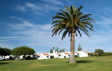 Free Palm Tree And Some Traditional Portuguese Houses. Royalty Free Stock Photo - 10272205