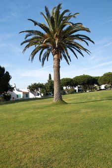 Palm Tree On A Garden In Algarve. Stock Images