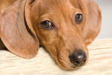 Free Puppy Stock Photos - 10272383
