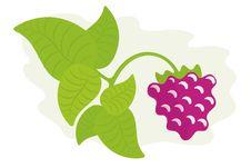 Free Raspberry Stock Photo - 10272450