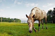 Free Funny Horse In A Pasture Royalty Free Stock Photo - 10272825