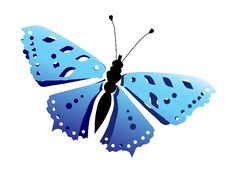 Free Butterfly Stock Image - 10274891