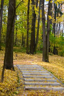 Free Autumn Colors In The Park Royalty Free Stock Photos - 10275238