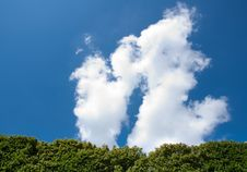 Free Tree Against Blue Sky Royalty Free Stock Image - 10275356