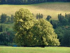 The Lonely Big Tree In The Green Nature Stock Photos