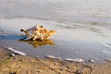 Free Conch Shell On Beach With Waves Royalty Free Stock Photography - 10275657