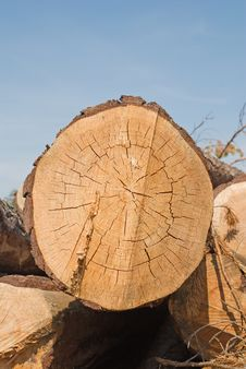 Sawmill Royalty Free Stock Photo