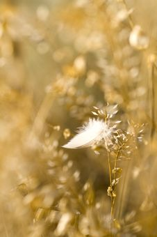 Free Lost Feather In Summer Steppe Royalty Free Stock Photo - 10277185