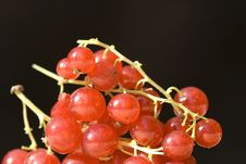 Free Currant Close-up Stock Photo - 10277580